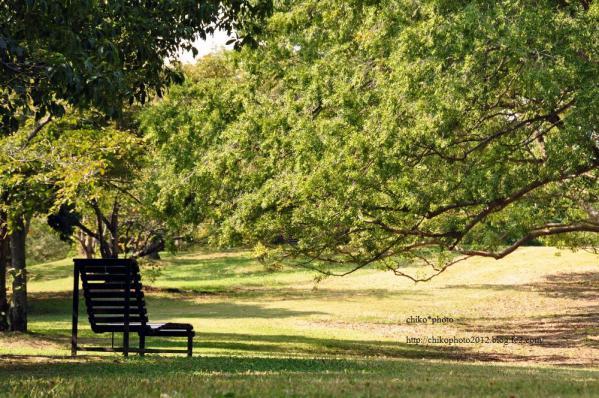 photo-204 桜樹とベンチ
