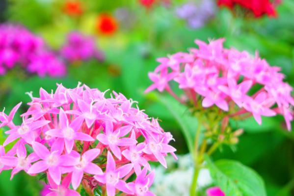 photo-205 秋に見つけた春色の花
