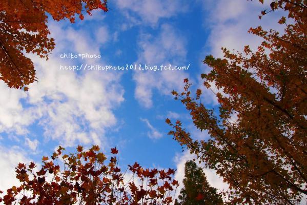 photo-222 秋と空