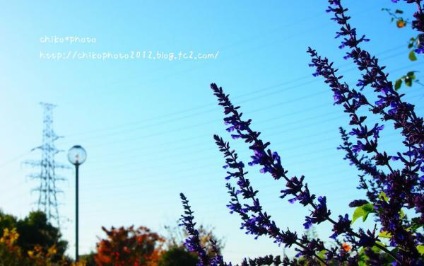 photo-226 お散歩フォト4