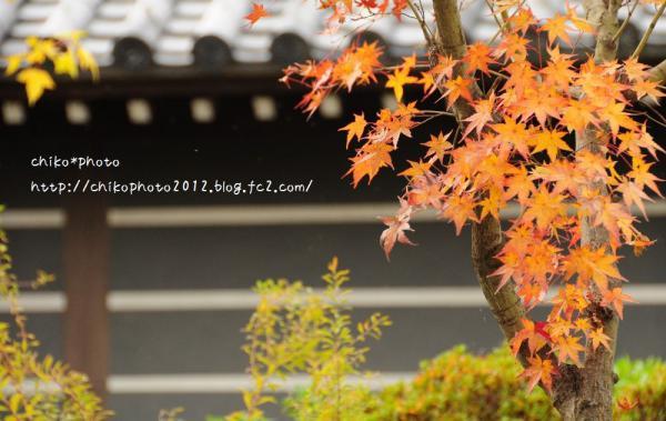 photo-280 秋 終盤