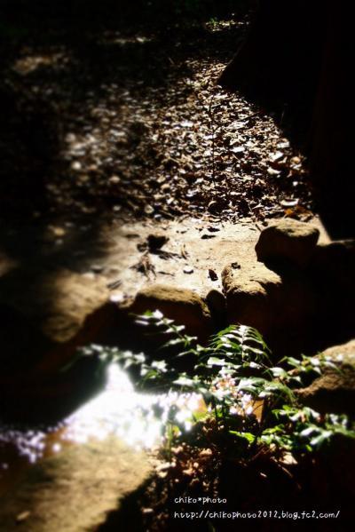 photo-294 鎮守の森1