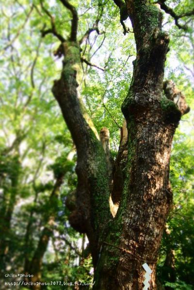 photo-294 鎮守の森2