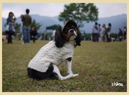 sweater20121002.jpg