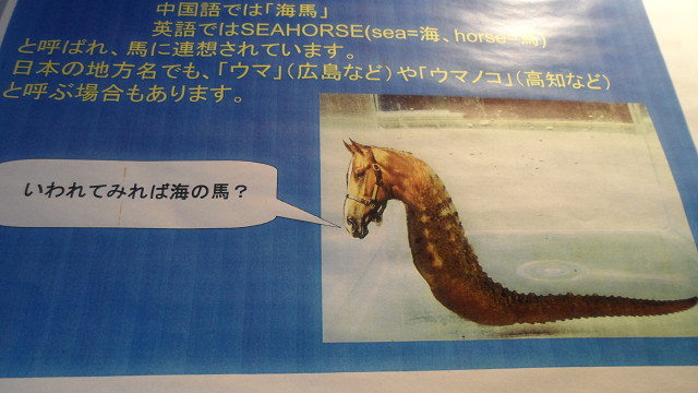 kagoshima20120163.jpg