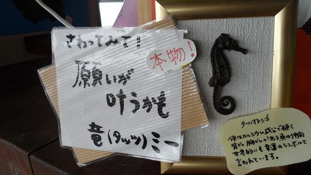 kagoshima20120172.jpg