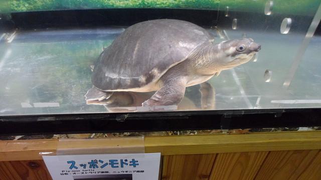 kagoshima20120269.jpg