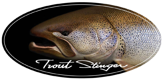 イトウ頭+Trout Stinger570