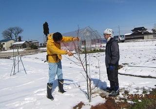 桃の剪定講習