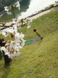 fc2_201長崎の桜
