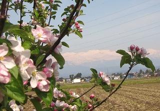 世界一の花と立山