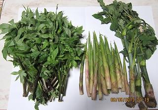 山菜の頂き物