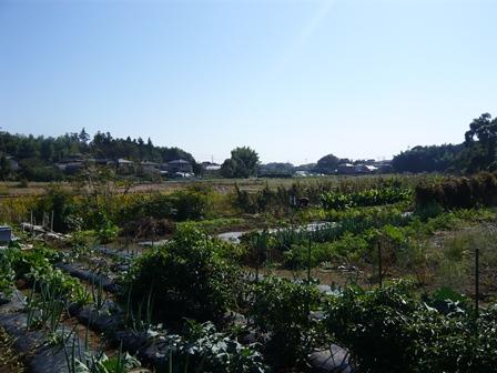 20121021_ 畑1