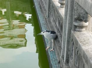 和平公園 (3)