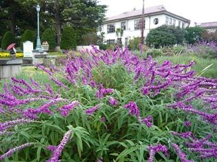 20121117_山手111番館庭園