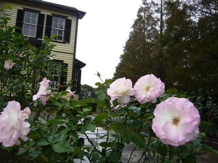 20121117_外交官の家庭園