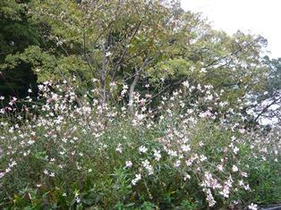 20121117_港の見える丘公園(0)