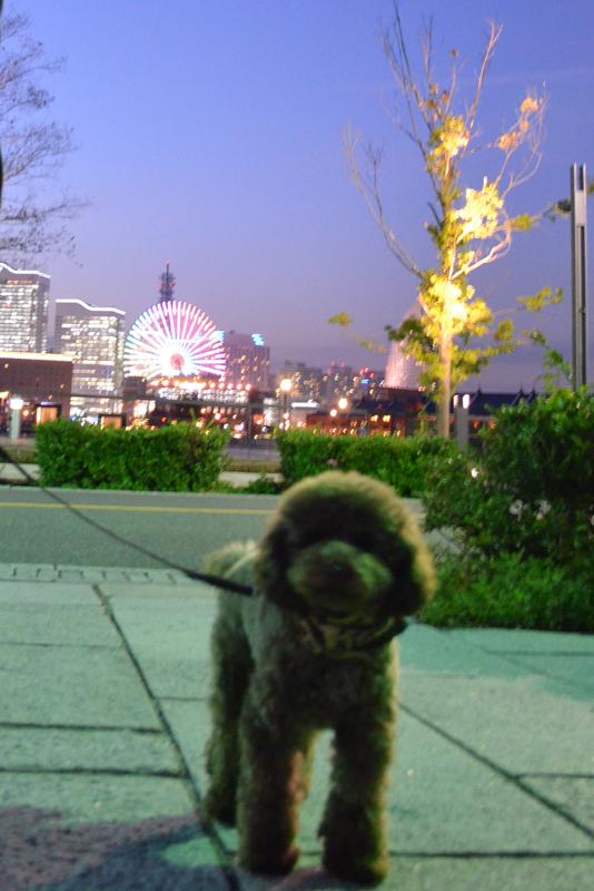 横浜夜景とチョコ