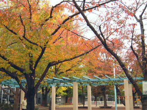 お散歩公園の紅葉