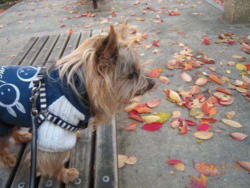クッキーと公園の落ち葉