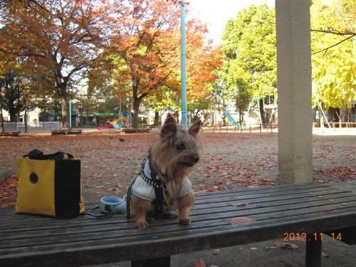 クッキーと公園の紅葉
