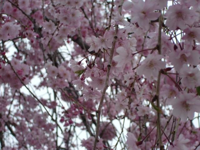 2011_0413_170027-CIMG6970.jpg