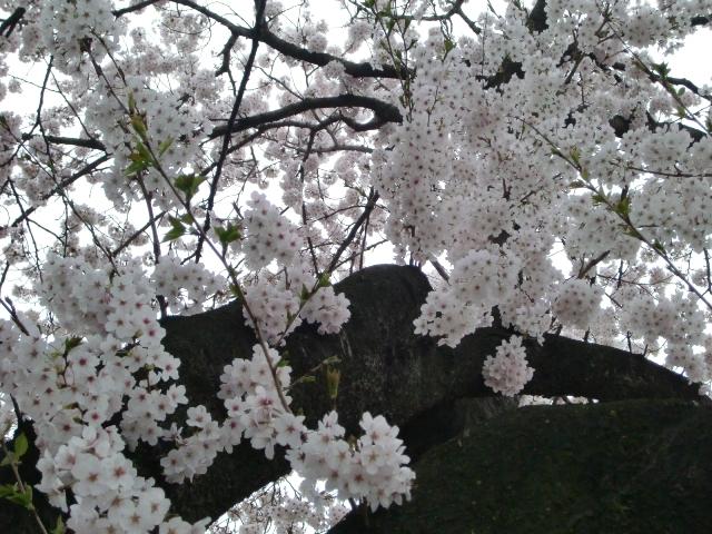 2011_0413_172304-CIMG7013.jpg