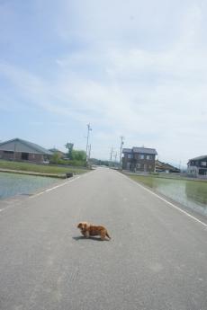 狩鹿野散歩2