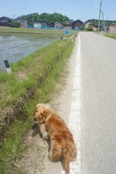 狩鹿野散歩