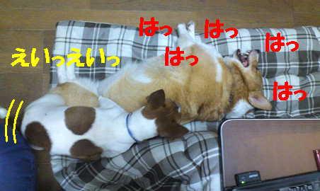 2012110710543672f.jpg