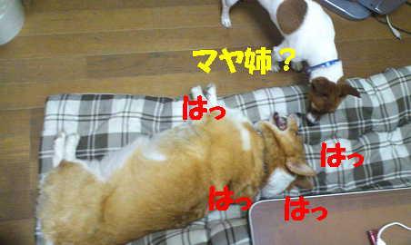 20121107105437597.jpg