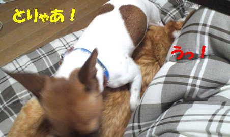 20121107105437fff.jpg