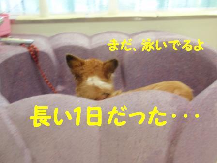 P9172274.jpg