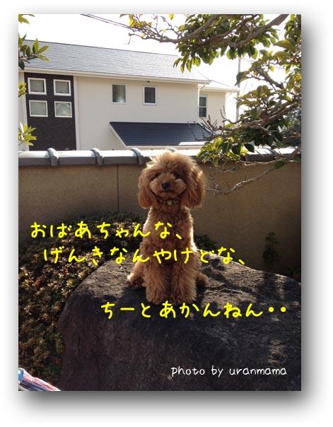 6IMG_1678.jpg