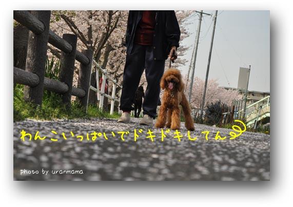 7DSC_0068.jpg
