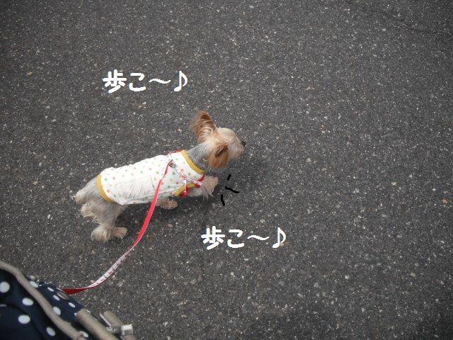 ママさんより散歩命