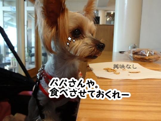 名古屋旅行記 (8)