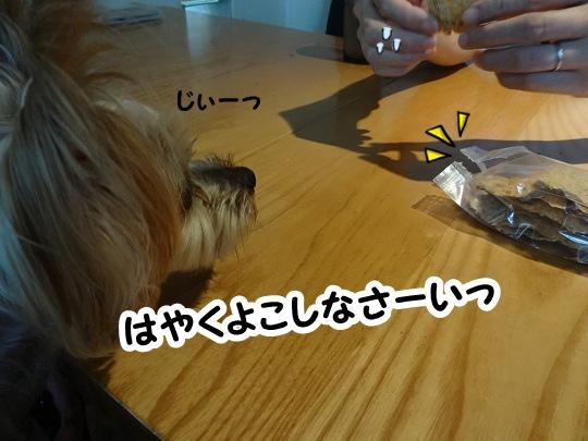 名古屋旅行記 (7)
