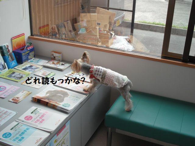 2012_03080026.jpg