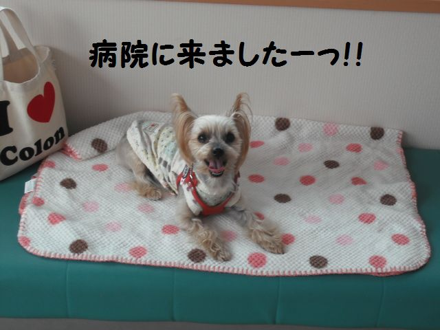 2012_03080030.jpg