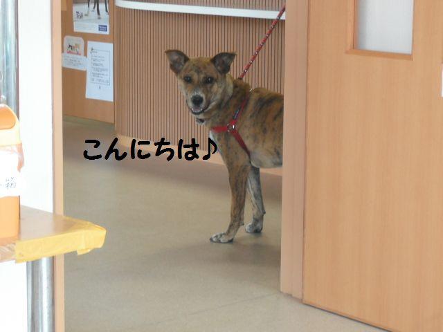 2012_03080067.jpg