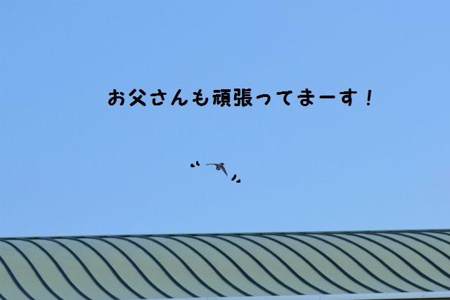 CSC_0220.jpg