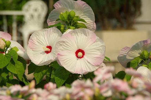 120728-06flower02.jpg