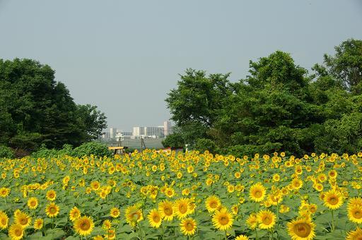 120728-16himawari01.jpg