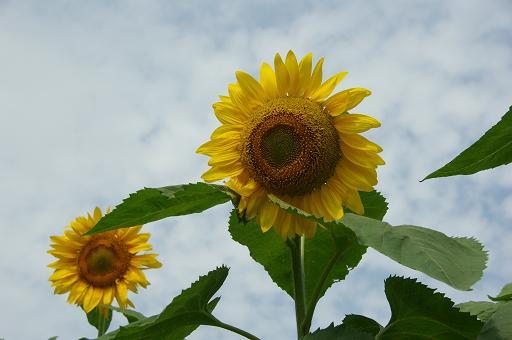 120811-06flower01.jpg
