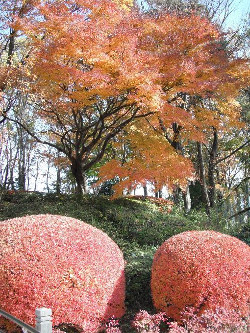 121205-03sagamihara02.jpg