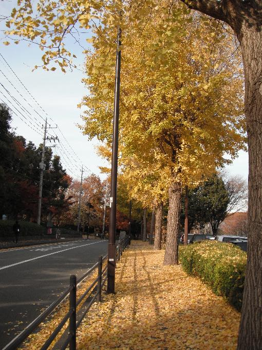 121205-15sagamihara09.jpg