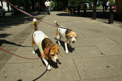 120813-24characooky walk on yamashita park