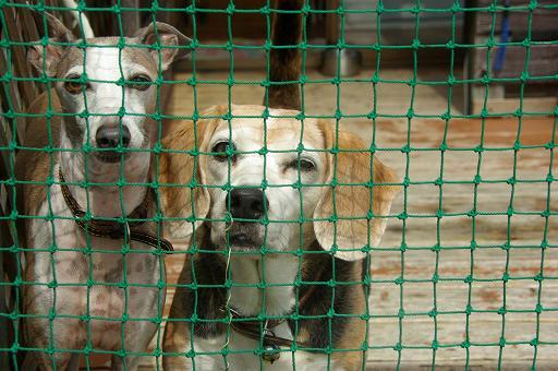 120929-25kanban dogs