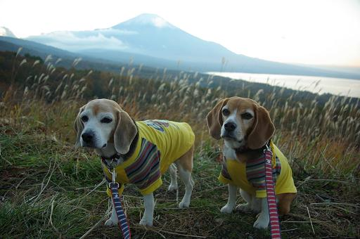 121103-34cookychara in Mt fuji
